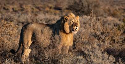 Travel to Kenya For Safari