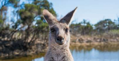 Travel the Australia Outback