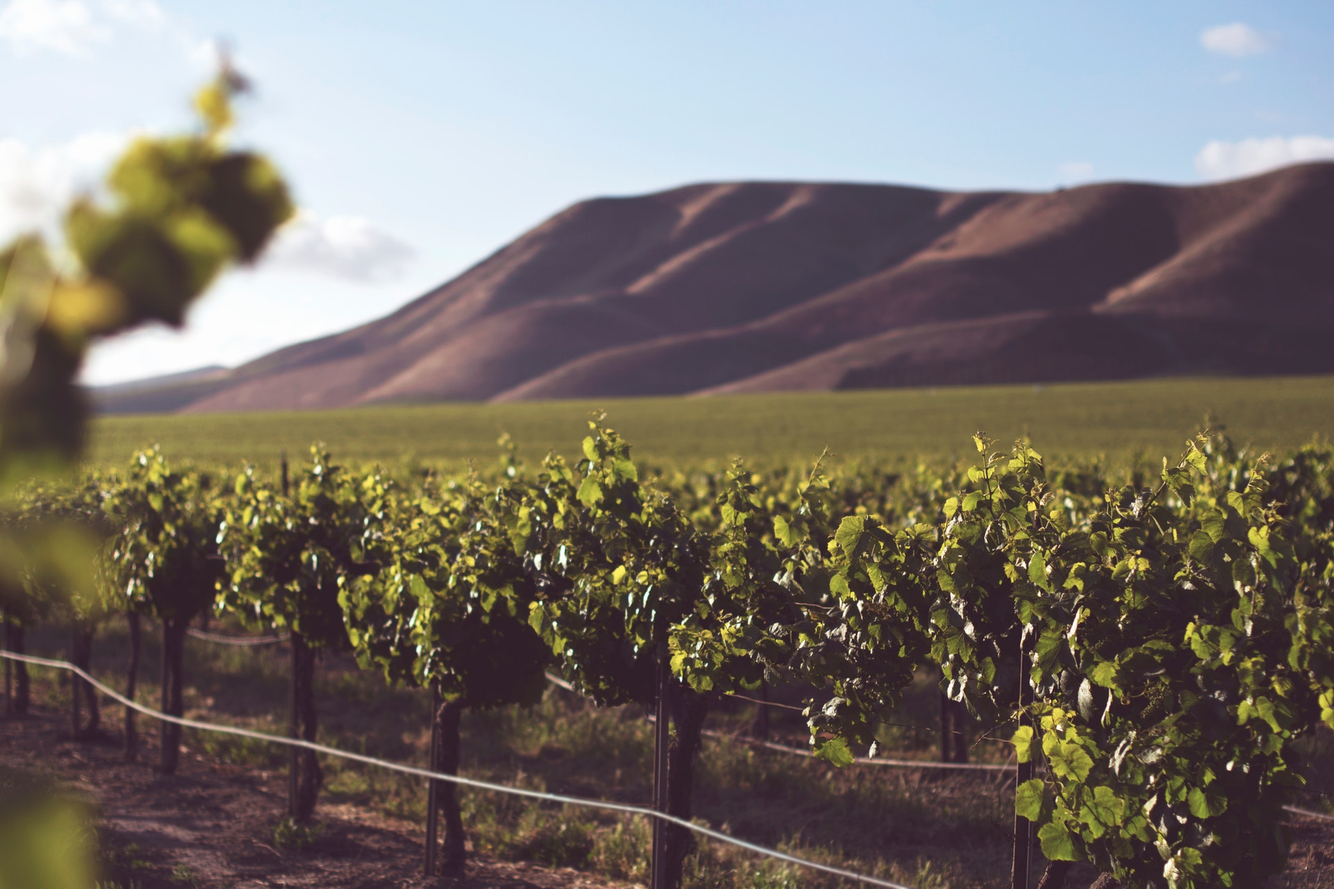 Travel Vineyards CA – A Day of Relaxation at One of the Wealthiest Areas of Wine Country